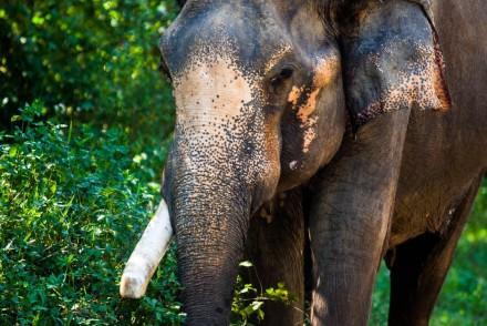 Hue Vietnam Elephant